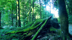 Green wild nature Stock Footage
