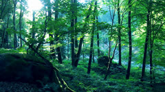 Healthy Nature Stock Footage