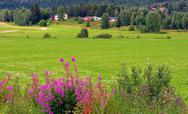Stock Photo of scandinavian rural landscape