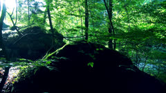 Healthy forest Stock Footage