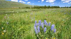 Bighorn National Forest Stock Footage