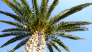 Stock Video Footage of palmtree background, travel destination