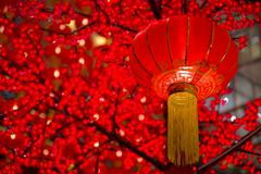 Detail of chinese new year laterns hanging on tress Stock Photos