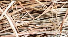 thatch background - stock photo