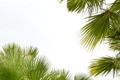 Palm leafs Stock Photos