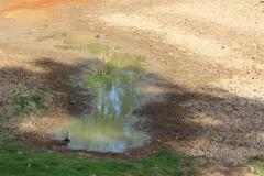Cracked clay ground into the dry season. Stock Photos