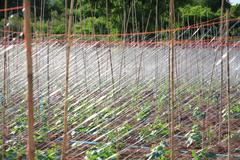 The net for green cucumber plant. Stock Photos