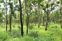 Green forest in south east asia. Stock Photos