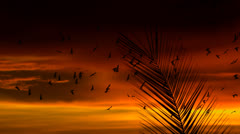 Palm Paradise Birds Fly At Sunset Stock Footage
