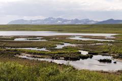 Tundra in alaska Stock Photos