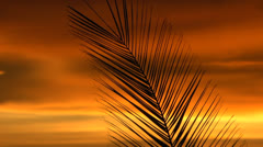 Palm Frond Dreamy Sunset Hues Stock Footage
