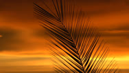 Stock Video Footage of Palm Frond Dreamy Sunset Hues