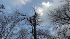 Trees & clouds time lapse  Stock Footage