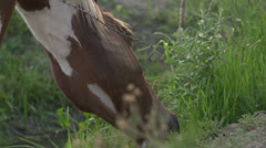 Horse near barbwire fence eating grass Stock Footage