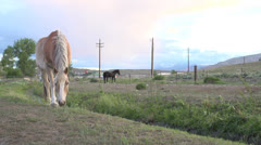 Horse in foreground and background eating Stock Footage