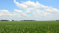 Soybean field in central Illinois Stock Footage