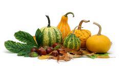 autumn collection 2 - stock photo