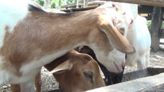 Goats, Farm Animals, 2D, 3D Stock Footage