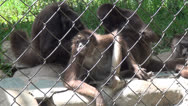 Stock Video Footage of Monkeys, Primates, Zoo Animals, Wildlife, Nature, 2D, 3D