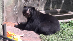 Bears, Mammals, Zoo Animals, Wildlife, 2D, 3D Stock Footage