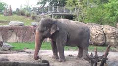 Elephants, Wildlife, 2D, 3D - stock footage