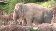 Stock Video Footage of Elephants, Wildlife, 2D, 3D