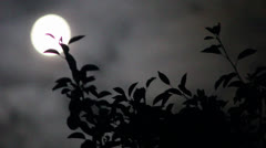 Time Lapse moon tree Stock Footage