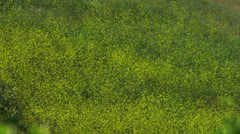 Melodic Grass Stock Footage