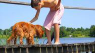 Stock Video Footage of Boy with English Cocker Spaniel on footbridge in summer near lake