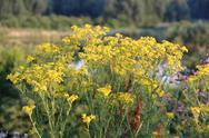 Stock Photo of wild flowers