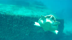 Sea Turtle from Behind Stock Footage