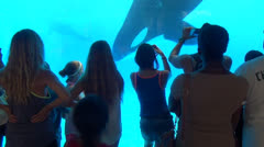 Killer Whale, Orca, Shamu, Sealife, 2D, 3D - stock footage