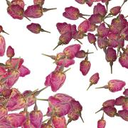 Background of rose buds Stock Photos