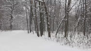 Stock Video Footage of Falling snow in the park 2