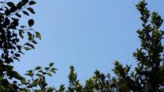 Honey Bee Swarm Stock Footage