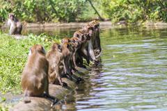 Monkeys watching Stock Photos