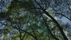 Low angle view looking upwards at New York buildings through the canopy of trees Stock Footage