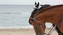Two Horses By The Sea Stock Footage