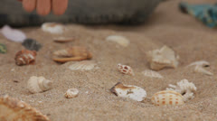 Shells On The Sand - stock footage
