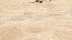 Collecting Shells On Beach - stock footage
