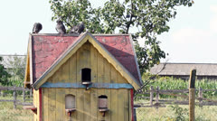 pigeons standing at birdhouse - stock footage