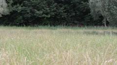 Italian countryside camera slider Stock Footage