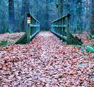 Stock Photo of path covered with leaves