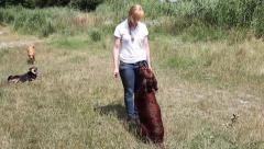 Dog training irish setter Stock Footage
