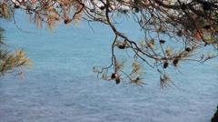 Pine cones on branch on background pond waves surface Stock Footage