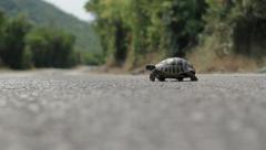 turtle crossing the road - stock footage