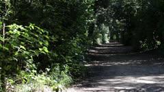 Bandini forest camera slider Stock Footage