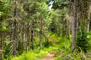 Forest Path Stock Photos
