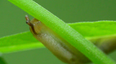 Garden Slug Stock Footage