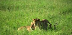 Mother and cub Stock Photos